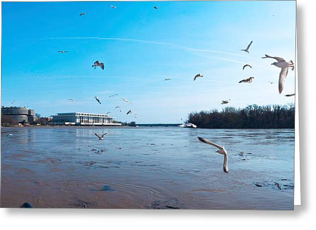 Flock Of Bird Greeting Cards - Flock Of Birds Flying At Old Georgetown Greeting Card by Panoramic Images