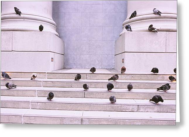 Flock Of Bird Greeting Cards - Flock Of Pigeons On Steps, San Greeting Card by Panoramic Images