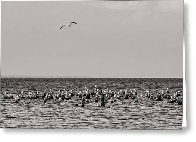 Waves Greeting Cards - Flock of Seagulls in Black and White Greeting Card by Sebastian Musial