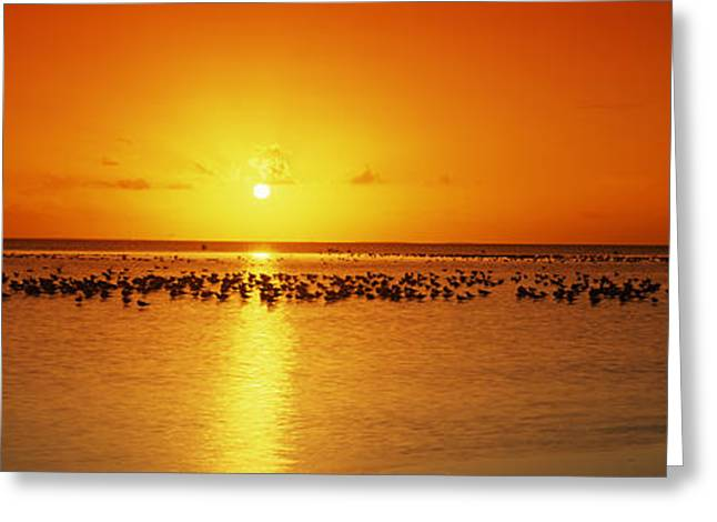 Flock Of Bird Greeting Cards - Flock Of Seagulls On The Beach Greeting Card by Panoramic Images