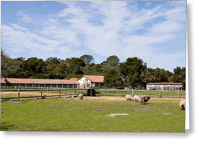 Medium Group Of Animals Greeting Cards - Flock Of Sheep Grazing In A Farm Greeting Card by Panoramic Images