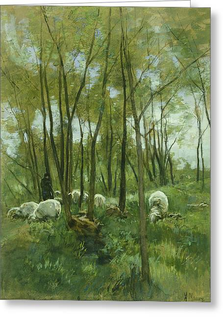 Dutch Shepherd Greeting Cards - Flock of sheep in a forest Greeting Card by J Beek