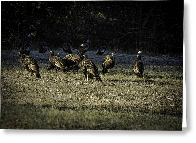 Flock Of Wild Turkeys Greeting Card by Thomas Young