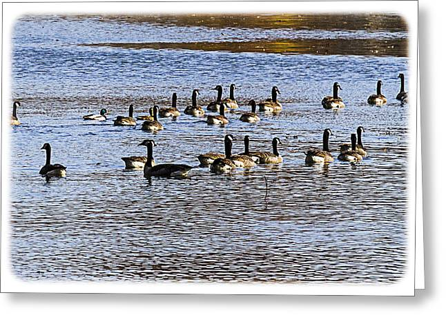 South For The Winter Greeting Cards - Flock on the Lake Greeting Card by Barry Jones