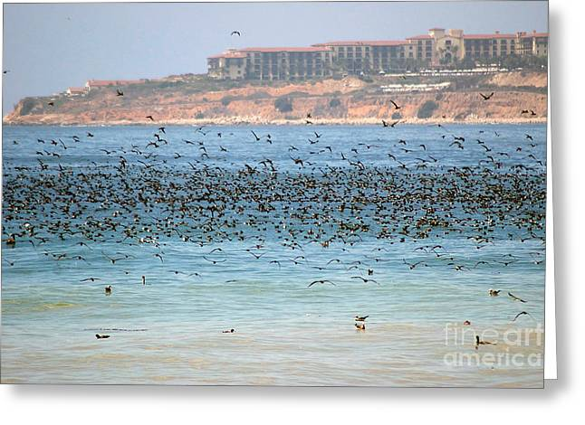 Seabirds Greeting Cards - Flocking At Terranea Greeting Card by Toula Mavridou-Messer