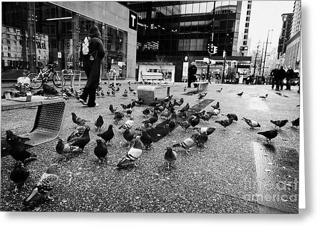 North Vancouver Greeting Cards - flocks of pigeons on the street outside Vancouver city centre station on granville street BC Canada Greeting Card by Joe Fox