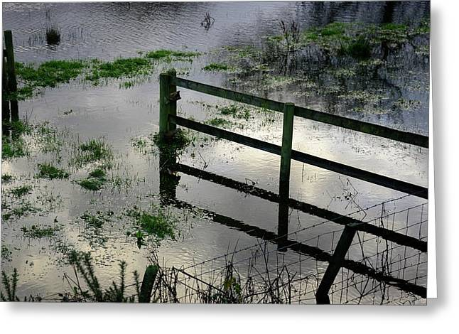 Flooded Field Greeting Card by Cordelia Molloy