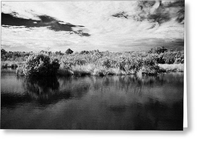 flooded grasslands and mangrove forest in the florida everglades Greeting Card by Joe Fox