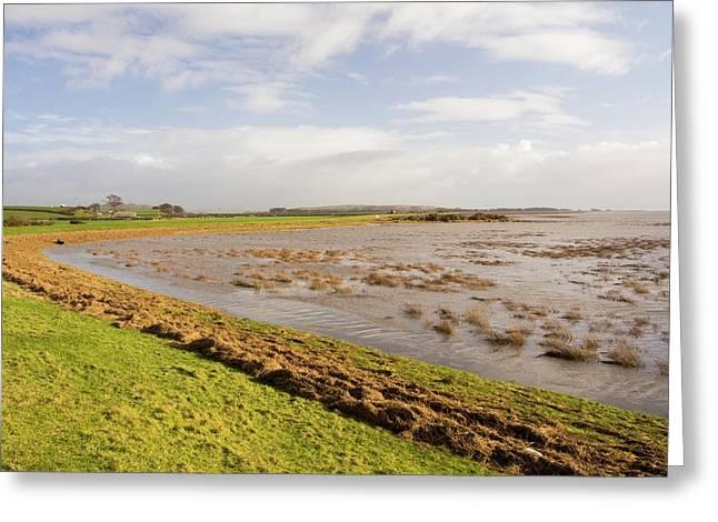 Flooded Salt Marsh Greeting Card by Ashley Cooper