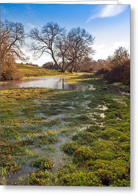 River Flooding Greeting Cards - Flooded watermeadow Greeting Card by Gary Eason