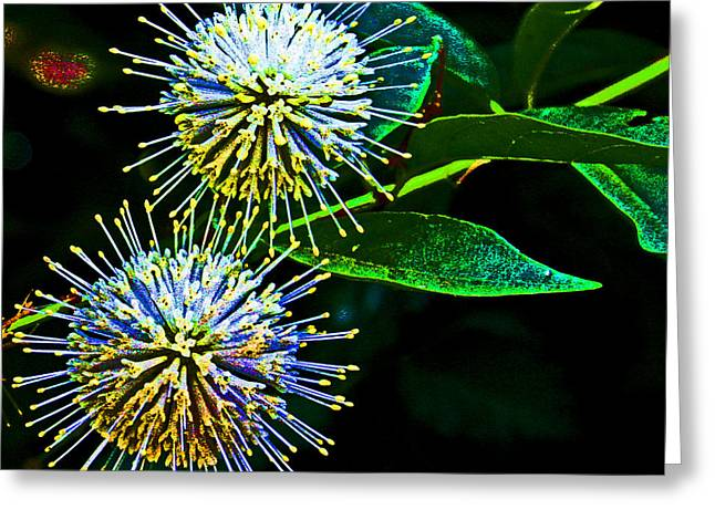 Asexual Digital Art Greeting Cards - Flora Fire Works Greeting Card by Joseph Coulombe