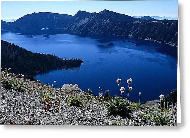 Mount Mazama Greeting Cards - Flora of Crater Lake Greeting Card by Sharon Elliott