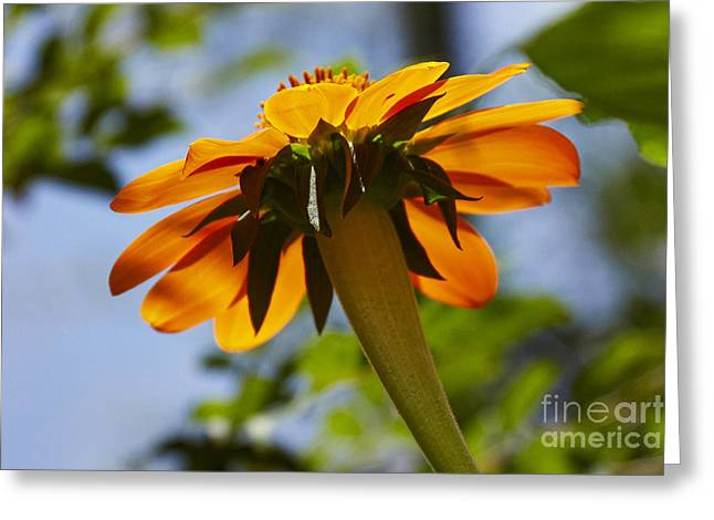Florida Flowers Pyrography Greeting Cards - Floral 4 - 05_26_2013 Greeting Card by Eyzen M Kim
