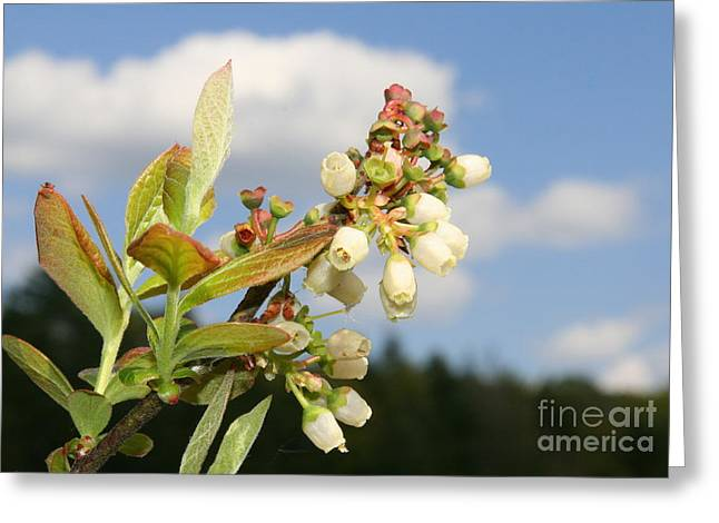 Beauty Greeting Cards - Floral Bells Greeting Card by Neal  Eslinger
