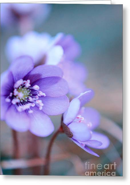 Mothers Day Greeting Cards - Floral Blues Greeting Card by Sabine Jacobs