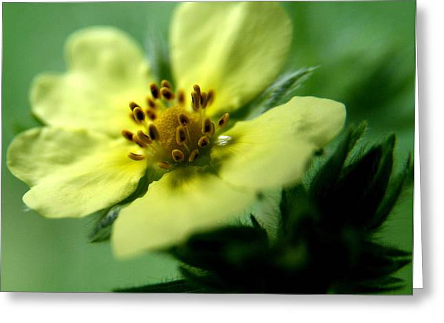 Flower Photography Greeting Cards - Floral Breeze Greeting Card by Neal  Eslinger