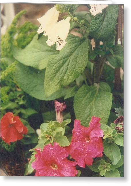 Robert Bray Greeting Cards - Floral Delight Greeting Card by Robert Bray