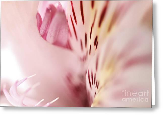 Floral Dreams Greeting Card by Pamela Gail Torres