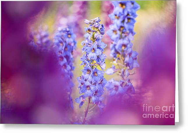 Abstract Expression Greeting Cards - Floral Focus  Greeting Card by Alanna DPhoto