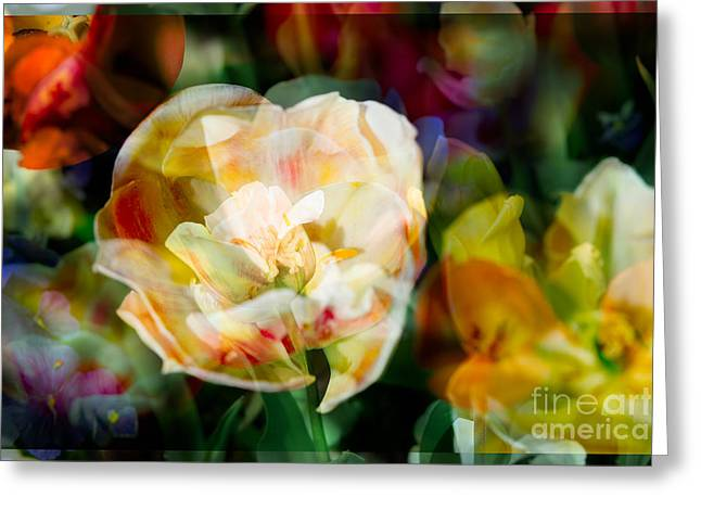 Floral Photographs Greeting Cards - Floral Galore Greeting Card by Sonja Quintero
