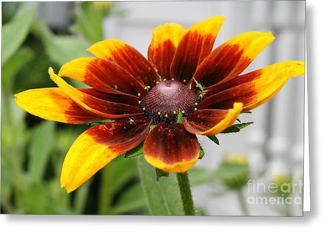 Nature Photos Greeting Cards - Floral Glow  Greeting Card by Neal  Eslinger