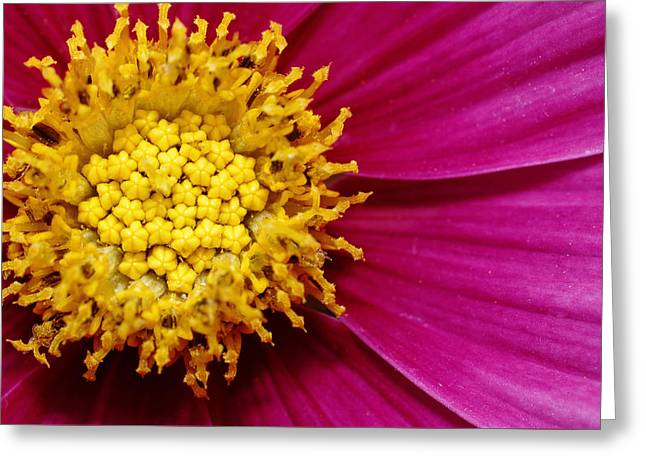 Nature Center Greeting Cards - Floral Heart Greeting Card by Dawn Currie