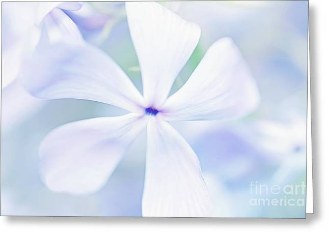 Phlox Greeting Cards - Floral in Pastel Tones of Blue Greeting Card by Natalie Kinnear