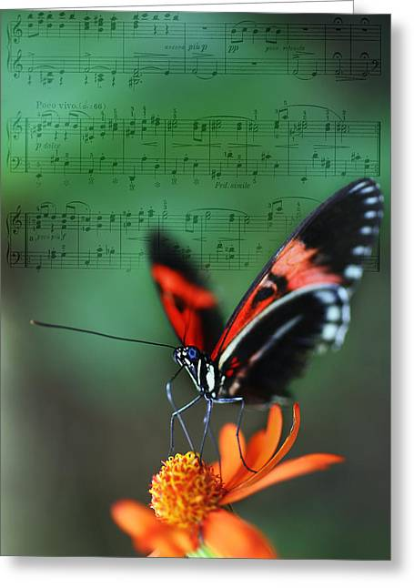 The Landscape Listens Greeting Cards - Floral Melody in Green Greeting Card by Charlie Photographer