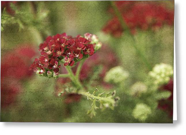 Texture Flower Greeting Cards - Floral Prose Greeting Card by Bill Pevlor