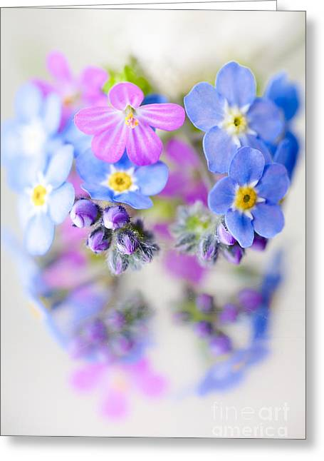 Geranium Flower Close Up Greeting Cards - Floral Reflection Greeting Card by Jan Bickerton