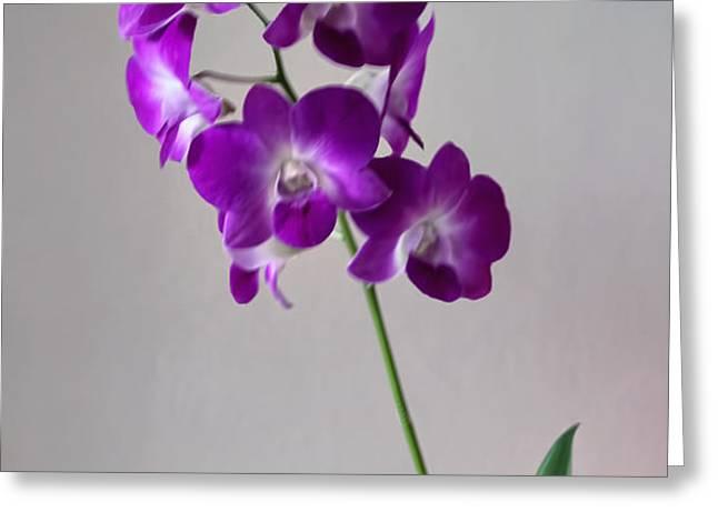 floral Greeting Card by Tom Prendergast