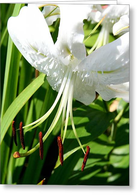 Fine Art Flower Photography Greeting Cards - Floral Weight  Greeting Card by Neal  Eslinger