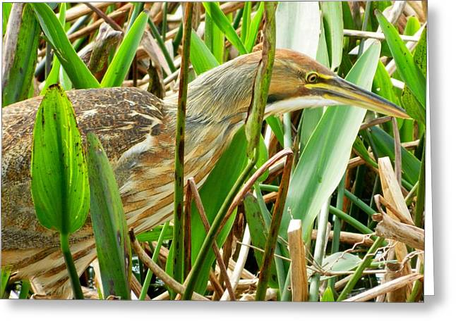 Art Decorator Discounts Greeting Cards - Florida Birds # 14 Greeting Card by Gunter  Hortz
