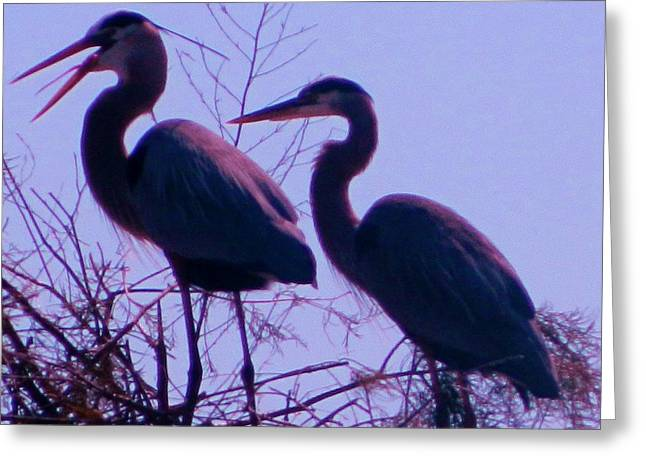 Posters On Sculptures Greeting Cards - Florida Birds  20 Greeting Card by Gunter  Hortz