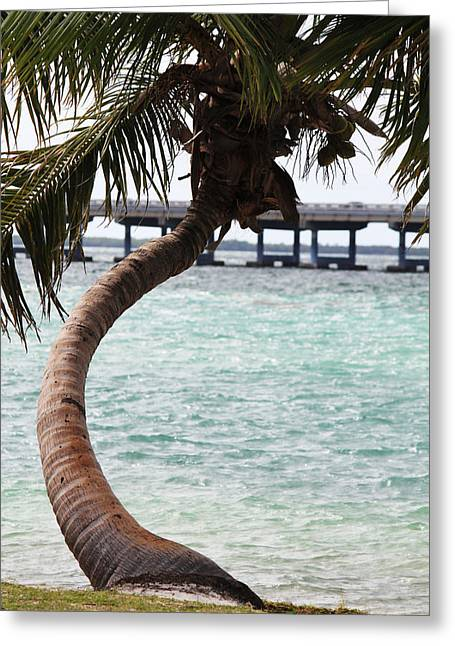 Bahia Honda State Park Greeting Cards - Florida Curve Greeting Card by Ella Char