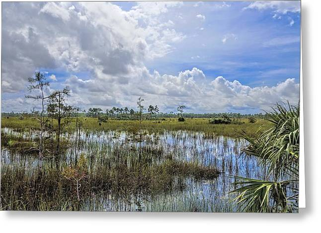 Deep Blue River Greeting Cards - Florida Everglades 0173 Greeting Card by Rudy Umans