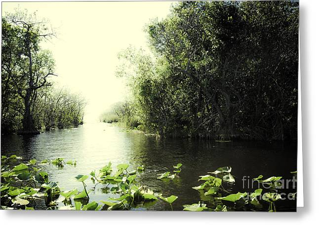 Watershed Greeting Cards - Florida Everglades 7 Greeting Card by Madeline Ellis