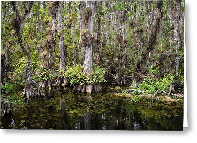 Epiphyte Greeting Cards - Florida Everglades Tropical Landscape - Big Cypress Swamp Greeting Card by Bill Swindaman