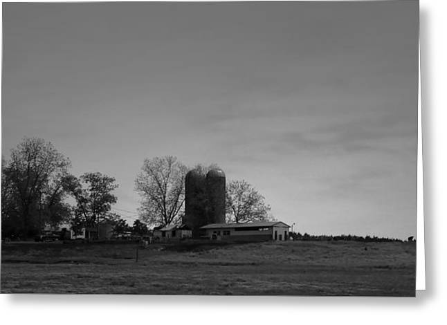 Snead Greeting Cards - Florida Farmlands Black and White Greeting Card by Debra Forand