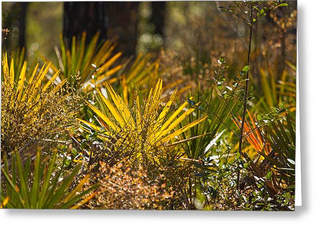 Light Tackle Greeting Cards - Florida Foliage Greeting Card by Gary Oliver