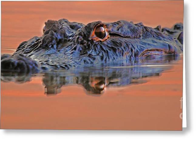 Fb Greeting Cards - Florida Gators Greeting Card by Luana K Perez