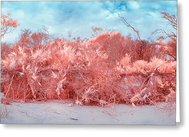 Jacksonville Greeting Cards - Florida in Infrared Greeting Card by Jeff Turpin