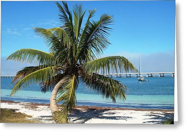 Bahia Honda State Park Greeting Cards - Florida Keys Bahia Honda Park Palm Tree Greeting Card by Andrew Rodgers