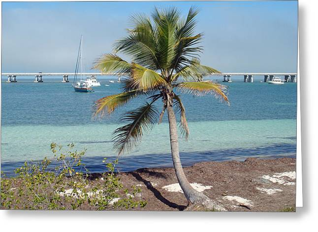 Bahia Honda State Park Greeting Cards - Florida Keys Bahia Honda State Park Palm Tree 2 Greeting Card by Andrew Rodgers