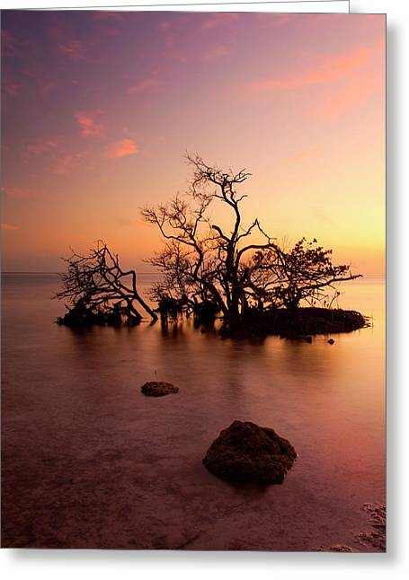 Mangrove Trees Greeting Cards - Florida Keys Sunset Greeting Card by Mike  Dawson