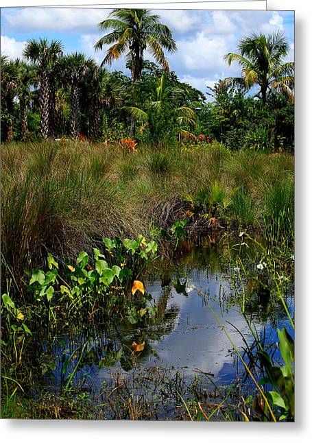 Florida Swamp Reflection Greeting Cards - Florida Lagoon Greeting Card by Joseph G Holland