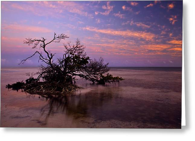 Mangrove Trees Greeting Cards - Florida Mangrove Sunset Greeting Card by Mike  Dawson