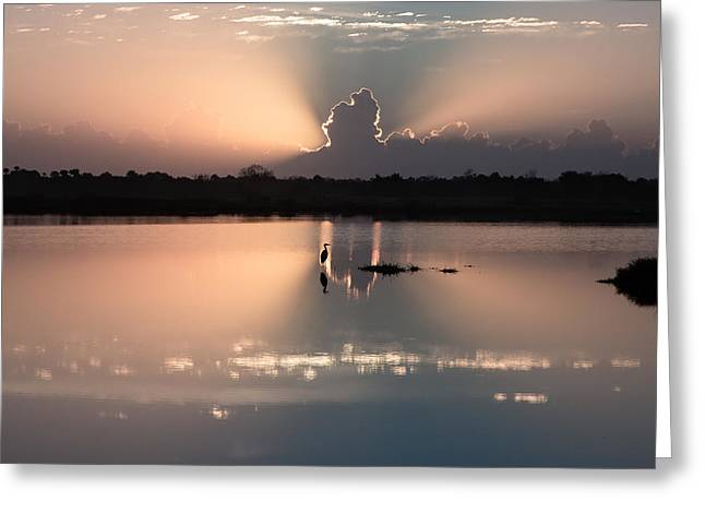 Peaceful Scene Greeting Cards - Florida Morning Photograph - A Blue Heron Sunrise- Version One   Greeting Card by Bill Swindaman