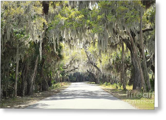 Moss Green Greeting Cards - Florida Moss Country Road Greeting Card by Andrea Hazel Ihlefeld