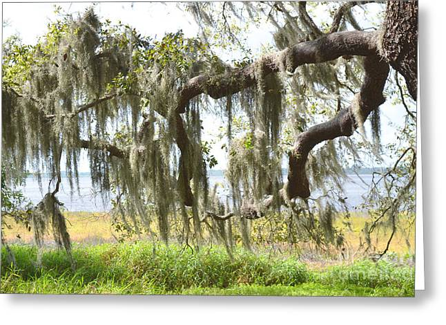 Moss Green Greeting Cards - Florida Mossy Tree Branches Greeting Card by Andrea Hazel Ihlefeld
